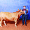 The conclusion of the 68th annual Cherokee County Junior Livestock Show and Sale brought plaudits and pride for many of Cherokee County's next generation of agriculture and creation. Foster Hall, representing the Alto FFA, won a grand champion title with his market steer heavy entry in the beef division.