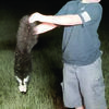 Courtesy Photo: Aaron Low  Mason Holmes gets up close and personal – perhaps a little too up close and personal – with a skunk.