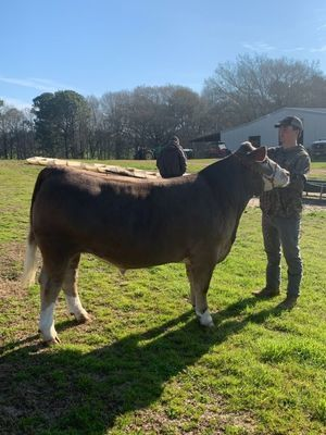 Courtesy photo Jacksonville FFA member Brantley Bauer spends some quality time with his steer, Rocket. Rocket was the topic of an essay Bauer wrote and entered into the Houston Calf Scramble Breed Essay Contest earlier this year.
