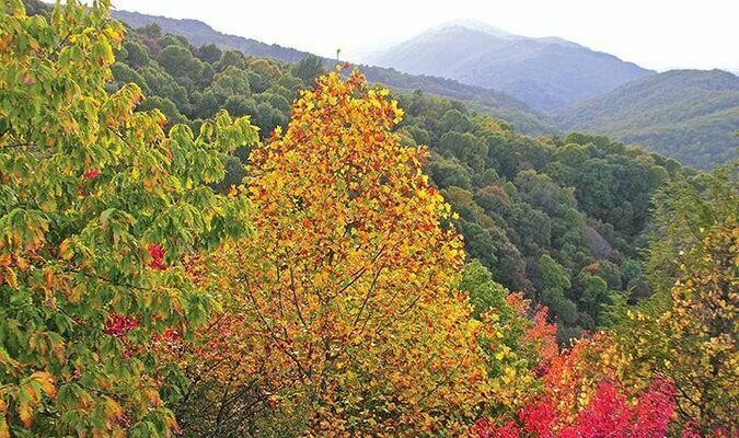 The reds, oranges and yellows of fall color are only just beginning to show on High Knob. This was the view late Wednesday afternoon from Flag Rock.  JEFF LESTER PHOTO