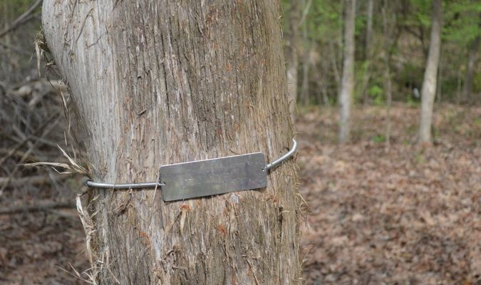 Tree necklace that was placed four years ago (Photo courtesy of Bill Shrum)
