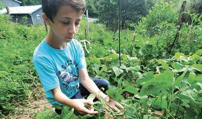 Aydan Perrigan was among several kids who signed up for a 4-H mini-garden project during the spring. He was the only participant who raised beans on the vine.