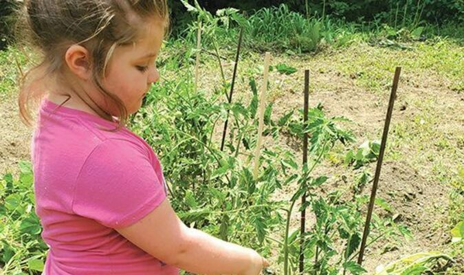 Claire Boyd showing her tomato plants.