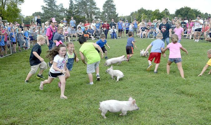 HERE PIGGY PIGGY -- Dozens of children participated in this year's Greased Pig Contest, a popular event at the Banana Festival in Fulton.