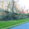 High winds passed through the Everton area Monday night, March 6, uprooting large trees throughout the area. Winds were at 50 plus miles per hour. This tree toppled on the Kenny and Marilyn Pendergrass property. No major structures on the property were damaged.
