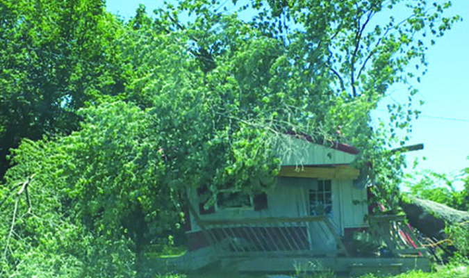 This house, located across from Miller school down a side street, was completely covered with a downed tree.