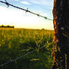 "Entered in the Beauty of The Farm category, this photo, titled ""Barbwire Sunset"", taken by Carla Hayes, Everton, placed first."