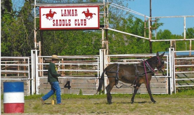 Ben Baugh of Carthage ground-drives his mule through the poles.