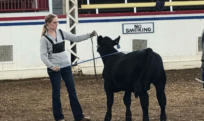 Maggie Middleton shows Anjou calf at Missouri State Fair Finals.