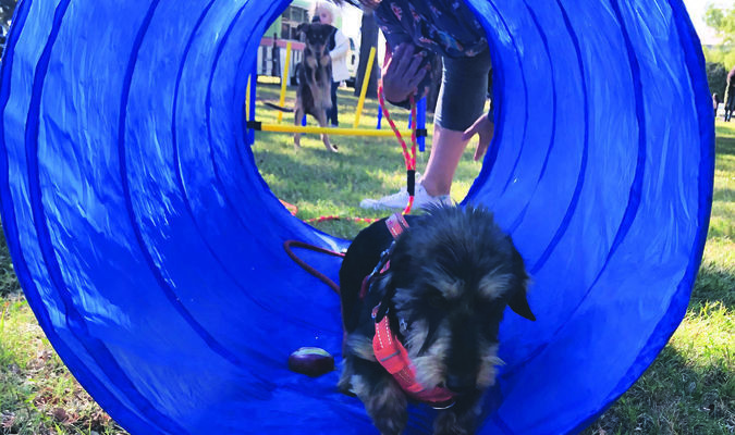 The Marlow Review staff and volunteers invited attendees to try out an agility course for dogs at Bark in the Park.