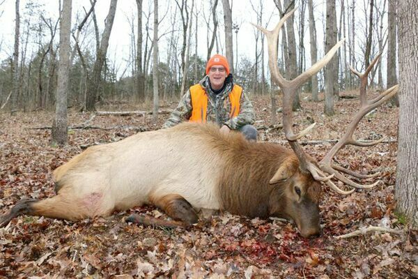 INITIAL SUCCESS! – Gene Guilkey of Liberty harvested this 6x7 bull elk on Wednesday, December 16th on public land in Shannon County on his first ever elk hunt. Guilkey was one of five successful hunters for the first ever Elk Season in Missouri.		          (Photo by Jeff Girdner)