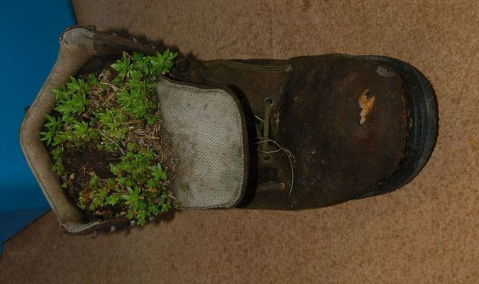 An old boot is one way to recycle a used item into something useful. This was done by Judith Smith.