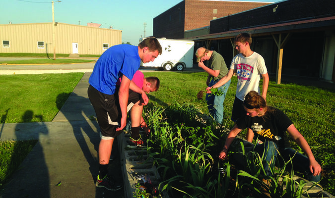 A raised bed garden is grown at HHS by Lewis County C-1 FFA members.  The garden is used to show students alternative growing practices and introduce students to different varieties of vegetables.