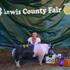 Marissa Abell, member of the Oyster Prairie 4H Club at the  Lewis Co Fair 4H/FFA Swine Show,July 14, 2017. She Won Grand Champion Market Hog and also won the Sr. division 4H/FFA Showmanship