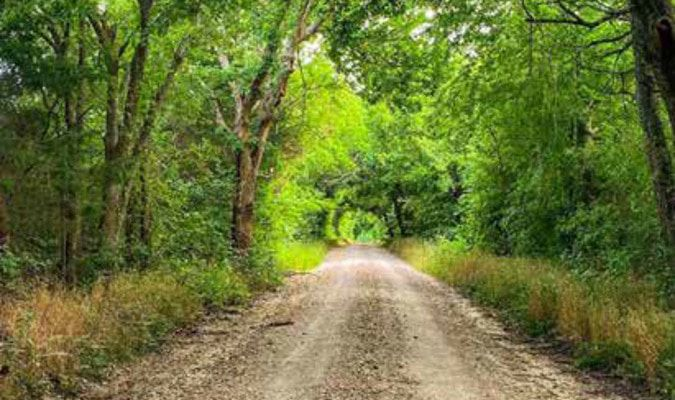 The serenity of a shaded gravel road.