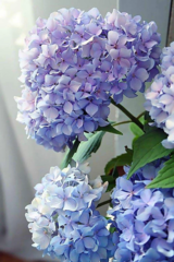 Pink Picasso Paint By Numbers - Happily Hydrangea