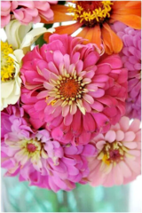 Pink Picasso Paint By Numbers - Zealous Zinnias