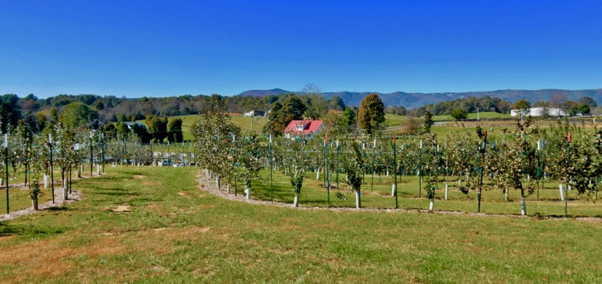 Halcyon Days Cider Co Labarynth Natural Bridge Va Getaway Mavens