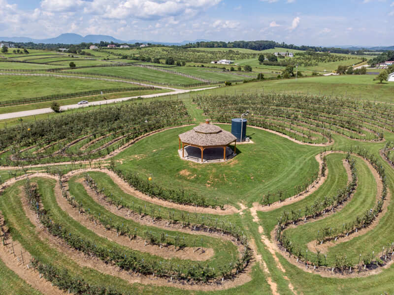 Halcyon Orchard Web