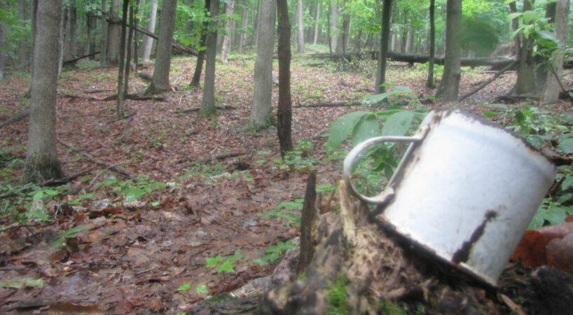 Brushy Hill Trail