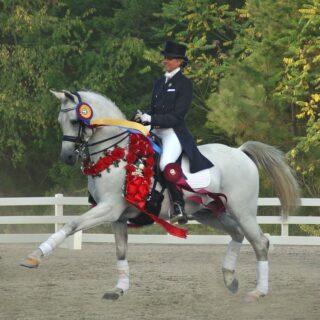Lexington VA Virginia Horse Center