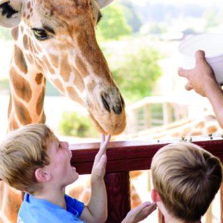 Natural Bridge VA Virginia Safari Park