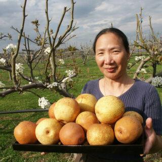 Lexington VA Natural Bridge Home Grown Asian Pears