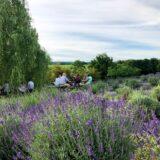 Tantivy Lavendar Farm