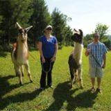 Lexington VA Applewood Llama Farm