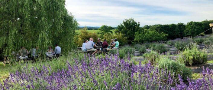 Tantivy Lavender Farm