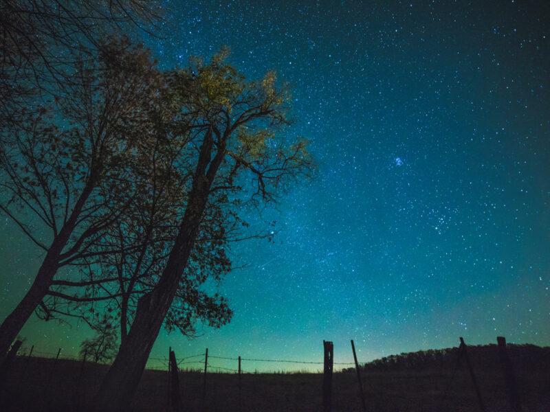 Dark Sky Tree1 Steve Shires