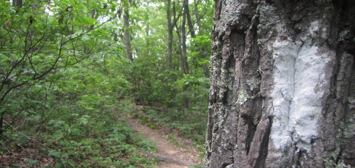 Hike Bluff Mountain