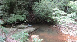 Laurel Run Trail