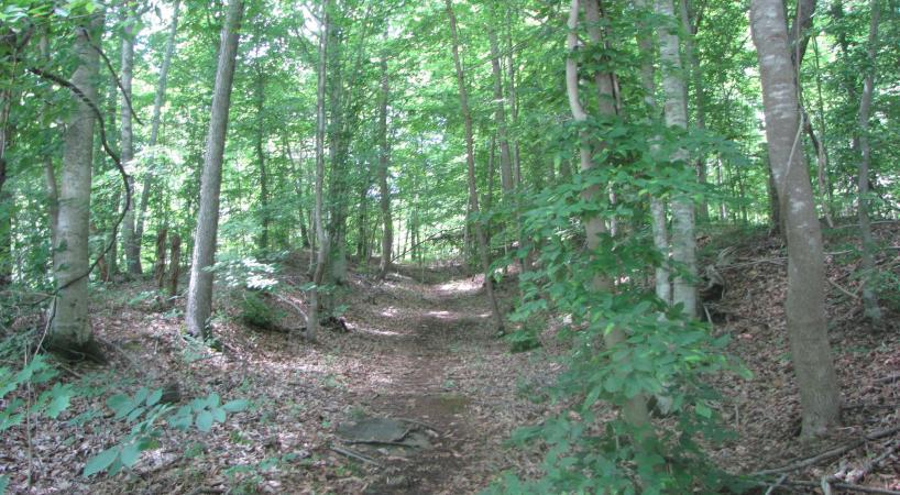 Hike BrushyHillsTrail 2