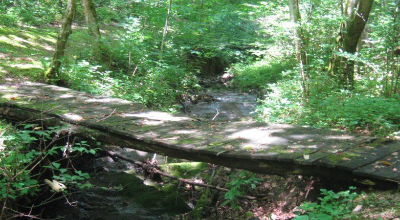 Hike LakeRobertson 7