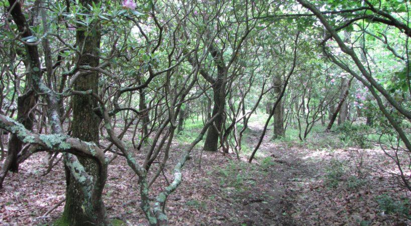 Hike MtPleasant 2