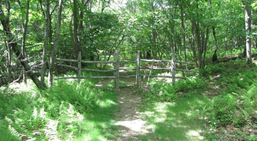 Hike MtPleasant 9
