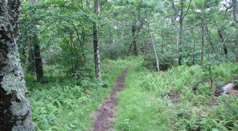 Hike ThePriest CrabtreeFalls 1