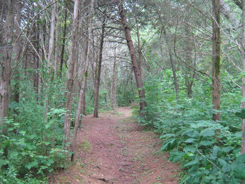 Hike LakeRobertson 2