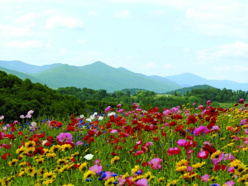 Lexington VA Issac Wildflowers Mountains