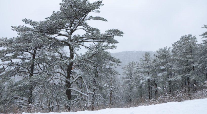 BRP snow2