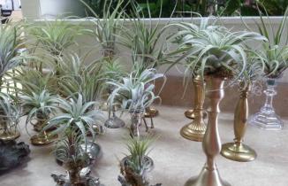 Browns floral design footer1 local flavor avl visit explore wedding asheville
