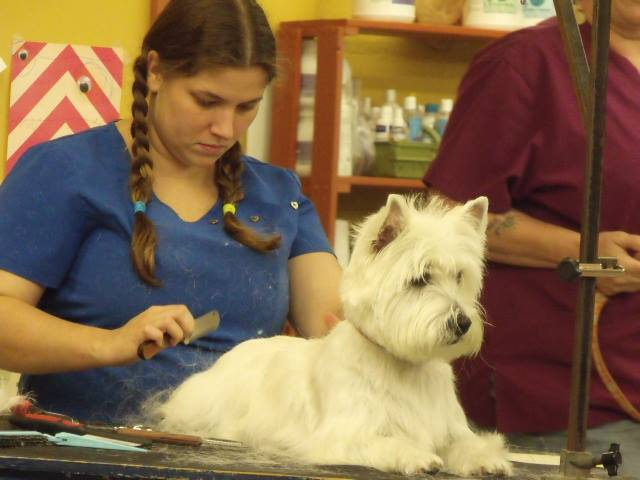 Canine shear heaven footer2 local flavor avl visit explore services asheville