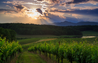 Biltmore wines footer2 local flavor avl visit explore made local asheville