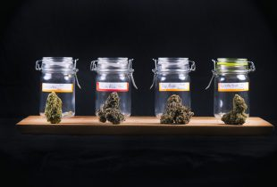 Weekly Update: Pot Stocks that Benefit from Anti-Pot Laws