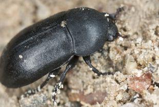 Beetles & Bones: A Grisly Profit