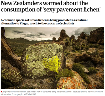 New Zealanders warned about the consumption of 'sexy pavement lichen'