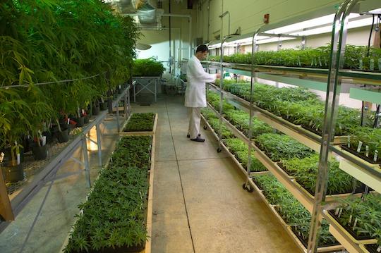 Marijuana lab
