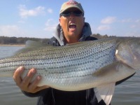 Lake Texoma Monster Striper