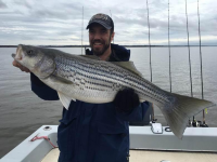 Stripers are Fat & Sassy on Lake Texoma